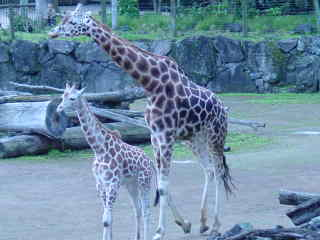 Mother and Baby walking together.