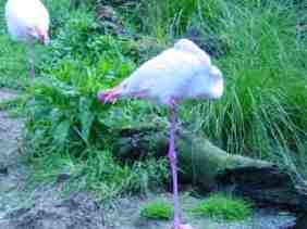 Look how I can balance on one leg. Can you do it too?