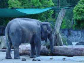 Just as well I have a big 'trunk' because I am planning on a holiday!