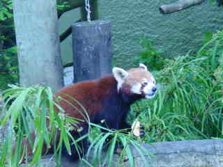 I can climb up high in the tree.