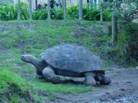 Slowly but surely, wins the race.