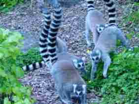 Can I see a tasty insect to munch!