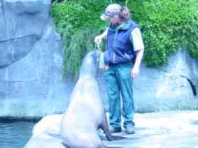 I like fish for lunch.