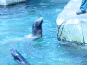 I like to swim, swoop and dive!
