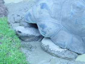 I carry my home on my back.