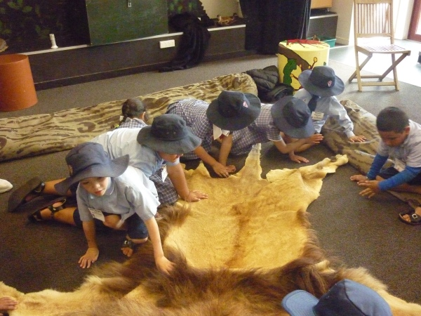Using all our senses to investigate the skin of a lion. Wow!