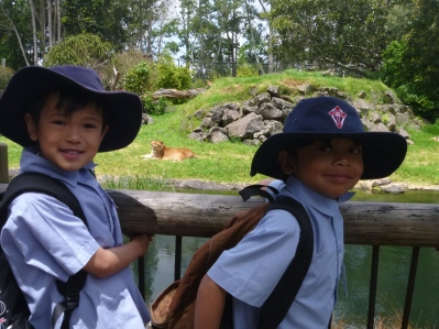 What are the lions thinking, as they look at us, looking at them?