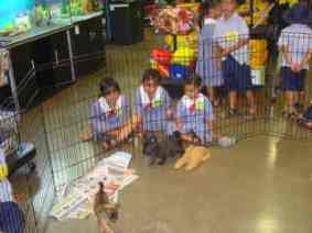 The puppies ran, and wrestled and played together in their play area,