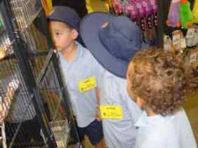The children looked carefully inside the bird's cage to see how a cockatiel lives.