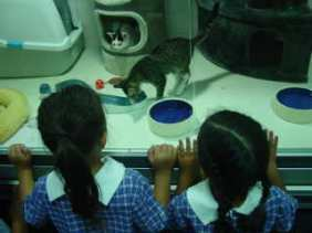 I can see food and water for the kittens to drink and eat.