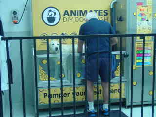 Owners can come and wash theri dogs at the back of the Animates store.