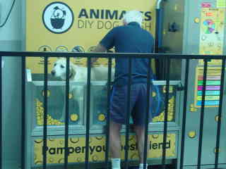 This dog was very well behaved during his wash.