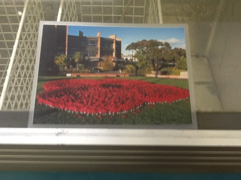 Three thousand poppies are needed.