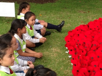We looked at the poppies. Their colour and shapes.