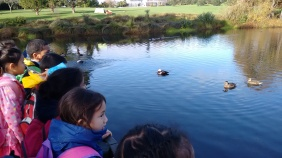 Room 1 loved looking at the ducks