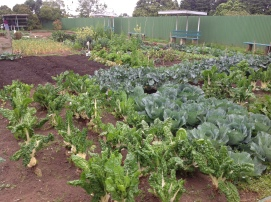Nice straight rows and square garden plots