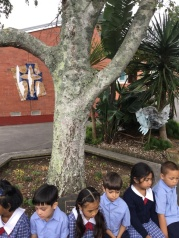 The beautiful tree at the centre of the grotto area