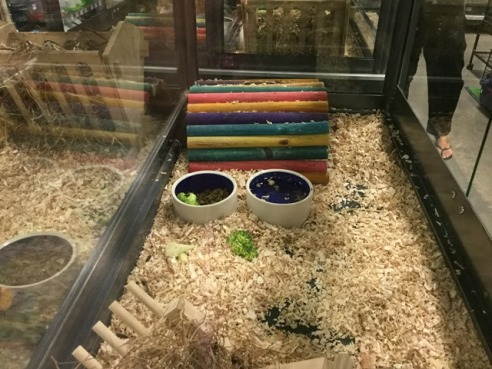 The guines pig cage