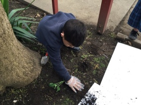 Patting the soil around
