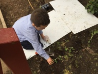 Gently putting in the seedling