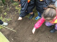 Into the soil