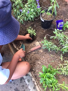 Planting the seedlings