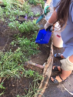 Watering newly planted seedlings