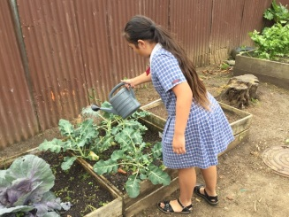 Watering the soil